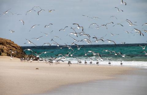 Fauna en Las Islas Marietas
