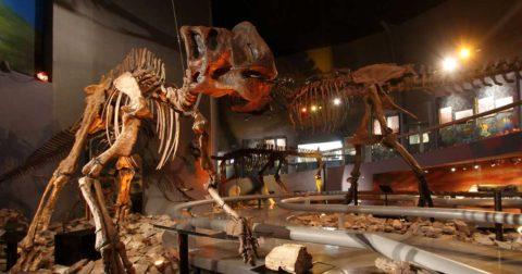 El Museo del Desierto en el estado de Coahuila.
