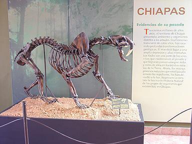 Museo Eliseo Palacios Aguilera