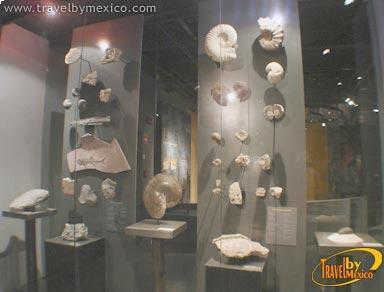 Restos arqueológicos exhibidos en el  Museo del Desierto.