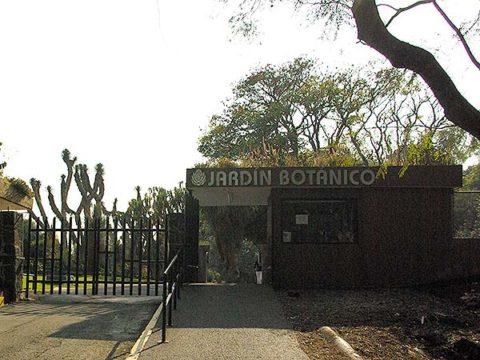 Museos en CdMx 13: Jardín Botánico
