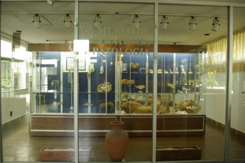 Museos en CdMx 1: Museo de Anatomía Patológica Animal