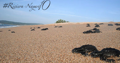 Vida Salvaje en Riviera Nayarit