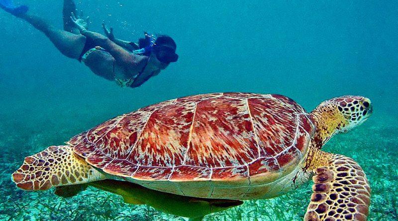 Akumal, la casa de las tortugas.