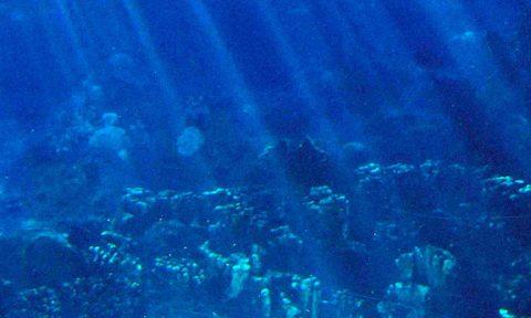 Arrecifes de Corales de Riviera Maya