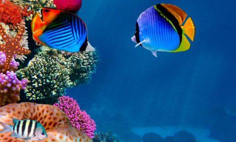 Fauna marina en los Arrecifes de Corales de Riviera Maya