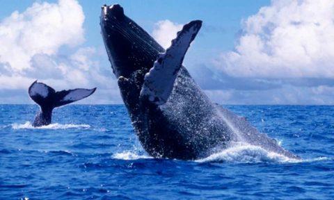 Ballenas: Encuentro con los gigantes de los mares